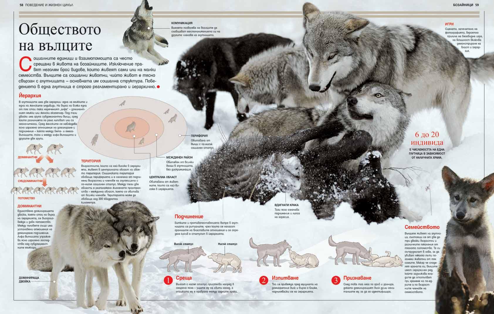 http://image.nauka.bg/bio/zoo/mammals-britannica2.jpg